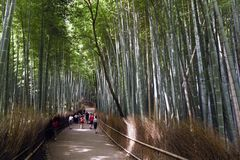 Japan, Kyoto, Arashiyama, view of the bamboo forest royalty free stock photo