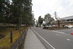 Road, lane, town, asphalt, tree, residential, area, transport, street, neighbourhood, surface, plant, vehicle, city, recreation, s. Photo of road, lane, town stock photos
