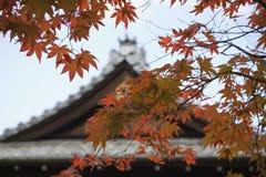 Japan Kyoto Tenju-an tempeltak med trädet för japansk lönn i förgrundshöst royaltyfri fotografi