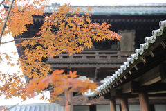 Japan Kyoto Tofukuji Temple roof with Japanese maple tree in for Stock Photo