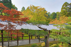 Japan Kyoto Tofukuji Temple roof with Japanese maple tree in for Stock Photos