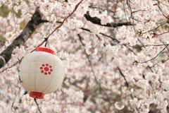 Japan lampa och sakura Royaltyfria Foton
