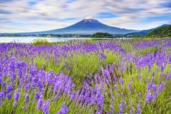Japan-May11,2017: De toeristen genieten shibazakura van tuin bezienswaardigheden bezoekend met de achtergrond van de fujiberg Royalty-vrije Stock Foto's