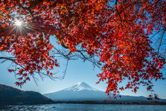 Japan Mount Fuji and Kawaguchiko Lake Autumn Postcard View with Maple Red Color Leafs. On a beautiful sunny day stock photography
