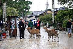 japan nara park Arkivfoton