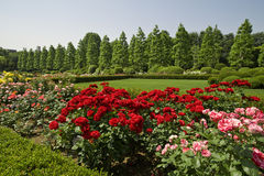 japan nationalpark tokyo Royaltyfri Bild