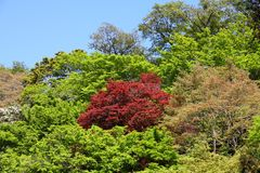 Japan nature Royalty Free Stock Photography