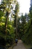 Japan,  near Arashiyama, city park with Buddha. Near Arashiyama, city park with Buddha, walking on the paths of the forest Royalty Free Stock Image