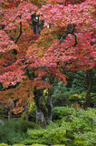 Japan Nikko Rinnoji Temple Maple trees in Fall colors stock photo