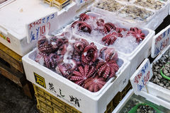 JAPAN Octopus Royalty Free Stock Photo