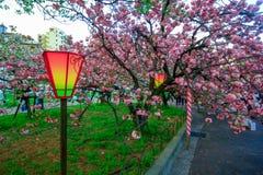 japan osaka Härligt ljus och färger av japanska lyktor och körsbärsröda blomningar arkivfoton