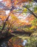 Japan parkerar höstlövverk Arkivbilder