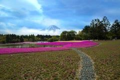 Japan. Phlox subulata flowers at Hitsujiyama Park in Saitama Prefecture, Japan Stock Photo