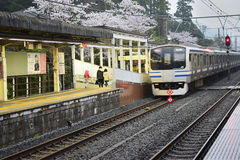 Japan Railway train & Cherry Blossom. Japan Railways train running through blooming cherry trees. Japans public transportation is amongst the best in the world Royalty Free Stock Photography