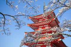 Japan red pagoda with sakura cherry blossom Stock Photography
