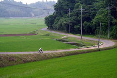 Japan rice fields Stock Photography