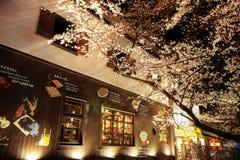 Japan säsong för körsbärsröda blomning i Kyoto i början av mars varje år, Japan royaltyfri fotografi