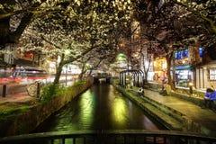 Japan säsong för körsbärsröda blomning i Kyoto i början av mars varje år, Japan royaltyfri foto