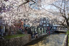 Japan säsong för körsbärsröda blomning i Kyoto i början av mars varje år, Japan royaltyfria bilder