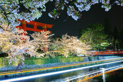 Japan`s cherry blossom season Royalty Free Stock Images