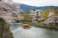 Japan`s cherry blossom season Stock Images
