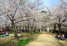 Japan`s cherry blossom season Stock Photography