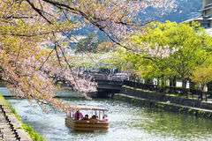 Japan's Heian Shrine cherry Stock Image
