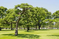 Japan's Imperial Palace lawn outside the Court Stock Photo