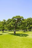 Japan's Imperial Palace lawn outside the Court Stock Images