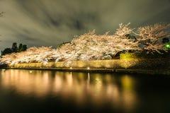 Japan-` s Kirschblütenjahreszeit Stockfoto