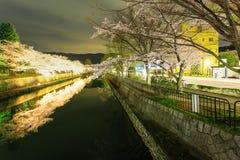 Japan-` s Kirschblütenjahreszeit Lizenzfreie Stockfotos