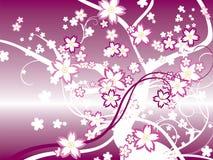 Japan Sakura Stockfoto