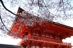 Japan Sakura Stock Foto