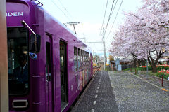 Japan scenic train, Kyoto, Japan. Purple color Train with cherry blooms in the Arashiyama,Kyoto,Japan Stock Images