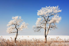 Japan sea in winter 8. Near Vladivostok, Russia, Far-East. Winter Stock Images