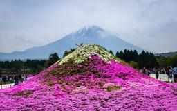 Japan Shibazakura festival royaltyfria bilder