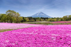 Japan Shibazakura Festival with the field of pink moss of Sakura or cherry blossom with Mountain Fuji Yamanashi, Japa Royalty Free Stock Photos