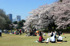 Japan : Shinjuku Gyoen National Garden. When the Sakura trees bloom, Japanese people continue the tradition of hanami, gathering in great numbers during the day Stock Images