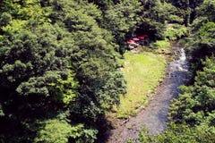 Japan skog Royaltyfri Fotografi