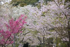 Japan springtime Royalty Free Stock Photography