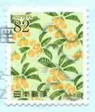 Loquat fruit illustration royalty free stock photos