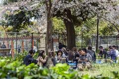 Japan, Tokyo, 04/12/2017 Een bedrijf van vrienden heeft lunch in het park royalty-vrije stock foto's