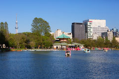 Japan. Tokyo. The lake in Ueno Park. Stock Photography
