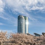 Japan. Tokyo. Sakura blossom in the center of Tokyo. Japan. Tokyo. Sakura blossom in a city park. Sakura blossom on the background of a modern business center stock photography