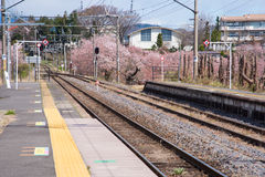Japan train station and cherry blossoms Stock Images