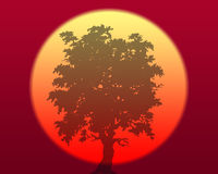Japan tree. Abstract background of a oriental sunrise with a tree Royalty Free Stock Photo