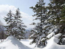 Japan trees under snow. Japan mountain snow forest view Stock Images