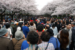 Japan : Ueno Park Royalty Free Stock Images