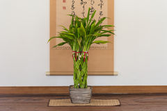 Japan vase with spiral plant. In the room Royalty Free Stock Images