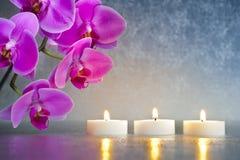 Free Japan Zen Garden Royalty Free Stock Photography - 31830127